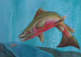 markskor trout art